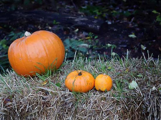 Наш ответ Хэллоуину: 10 способов использовать тыкву по назначению