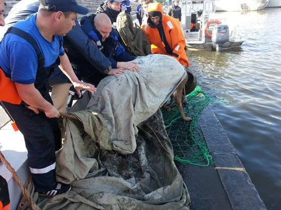 В Москве-реке поймали живого оленя