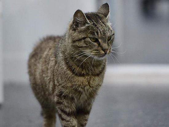 Кошка Матроска возможно беременна и теперь у нее есть свой Твиттер и Инстаграмм