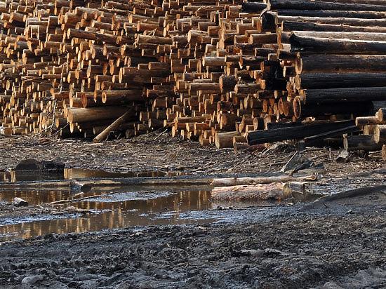 Комитет лесного хозяйства Подмосковья: «Сжигание порубочных остатков в МО не может быть причиной появления запаха гари в Москве»