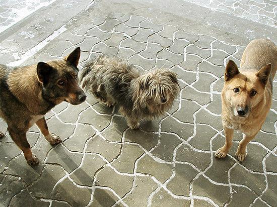 Сотрудники ООО «Перспектива-Авто», которое занимается отловом безнадзорных животных на территории города, угрожают любителям этих самых животных физической расправой