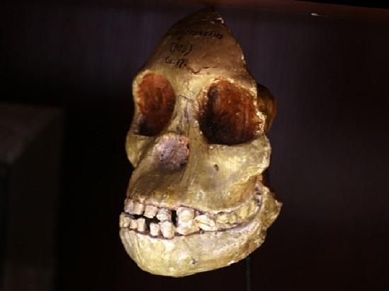 Ученые всего мира 90 лет принимали австралопитеков за предков людей