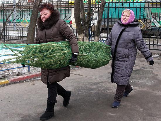 Купить елки в Москве можно будет по прошлогодним ценам