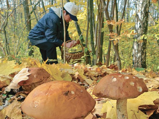 Небывалый урожай грибов — к войне? Специалисты прокомментировали народные приметы