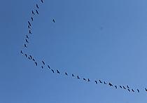 """В редакции """"МК"""" обсудят вопросы охоты на водоплавающих птиц"""