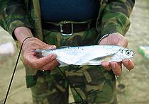 Астраханские рыбаки получат линейки для измерения пойманной рыбы