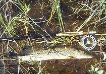 Рыбака осудили за незаконный вылов щуки