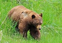 Вологда меняет порядок выдачи разрешений на добычу охотничьих ресурсов в ОДОУ