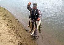 Под Волгоградом разгорается рыболовный ажиотаж