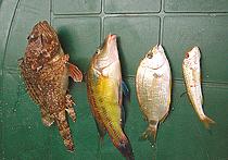 Ученые создали программу для опознавания рыб