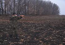 Поддержка властями отстрела волков привела к положительным результатам в Карелии